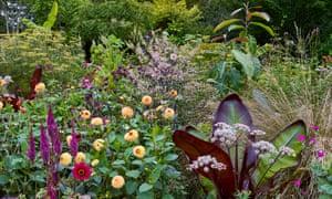 Dahlias, including 'Sunny Boy', create pops of colouramong grasses, Ensete ventricosum 'Maurelii', and Itoa orientalis