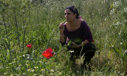 Vivien Sansour collects fennel and mint on her plot in Battir.