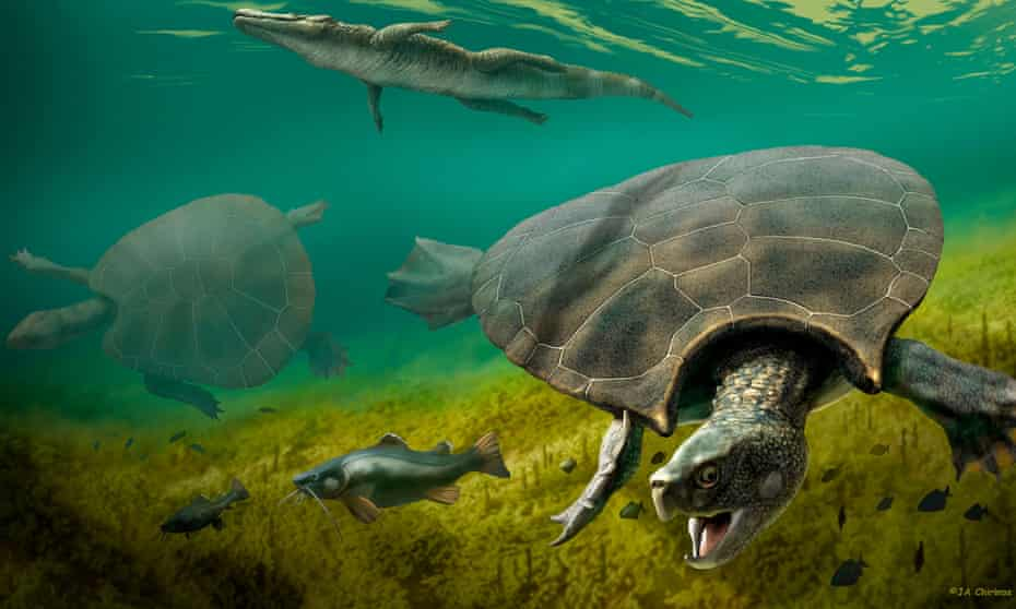 The huge extinct freshwater turtle Stupendemys geographicus, that lived in lakes and rivers in northern South America during the Miocene Epoch, is seen in an illustration released on Wednesday.