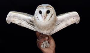Bangalore, India: A white owl