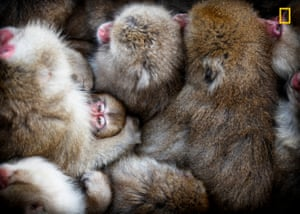 A winter's day in Jigokudani monkey park, Nagano, Japan. I photographed them from above just as a little monkey nestled in its mother's arms looked at the camera.