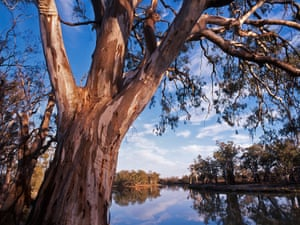 Red gum trees hanging over the banks of the Murray River at Ned's Corner in Australia
