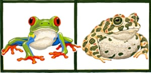 Halliday's paintings of a red-eyed tree frog (left) and green toad