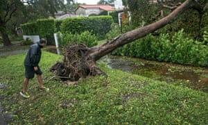 A man looks at an uprooted tree pictured after the full effects of Hurricane Irma hit in Miami, Florida