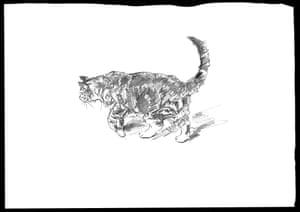 Grace's cat