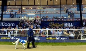 Greyhound being paraded before a race at Wimbledon greyhound stadium