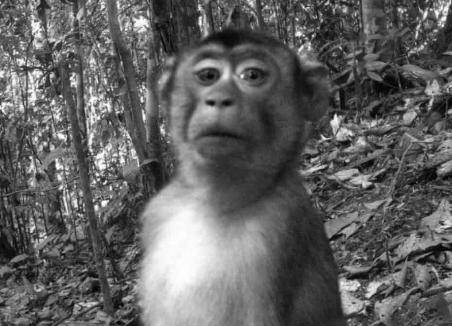 Photographs of exotic animals taken by camera traps and originally created for scientific purposes, yet showing an incredible range of character, humour and pathos. Hanimann calls the work 'a never-intended and and unconscious animal selfie'.