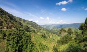 Bwindi national park in Uganda