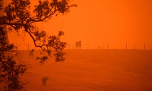 Cattle stand in a field under a red sky caused by bushfires in Greendale on the outskirts of Bega, in New South Wales
