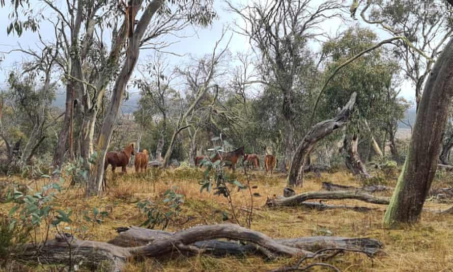 Horses in Long Plain.