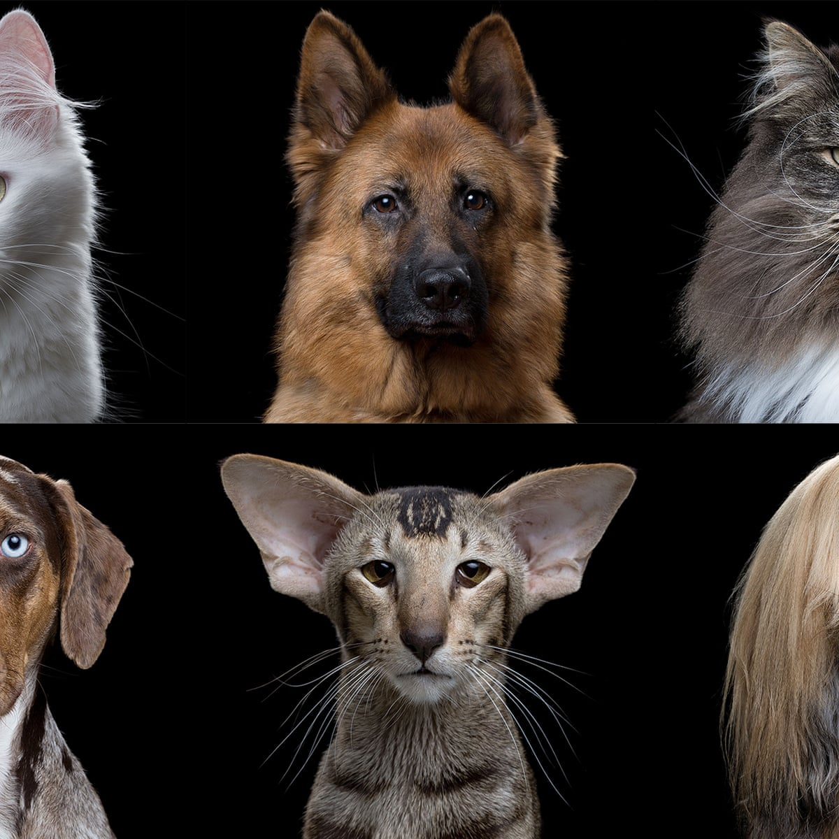 Cats Vs Dogs In Terms Of Evolution Are We Barking Up The Wrong Tree Science The Guardian