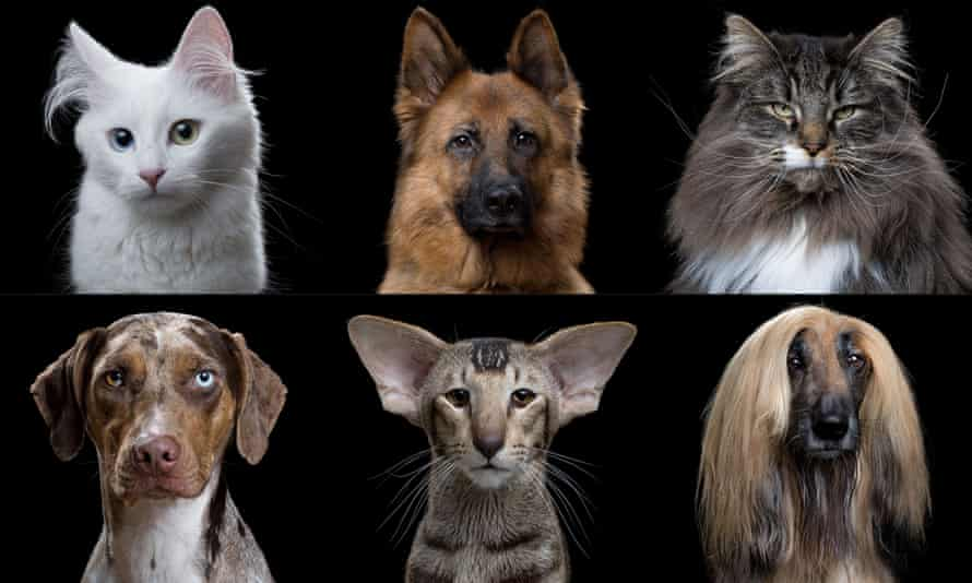 Domesticated dogs and cats