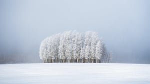 Frosted trees in front of a bank of fog near Broomfield, Colorado