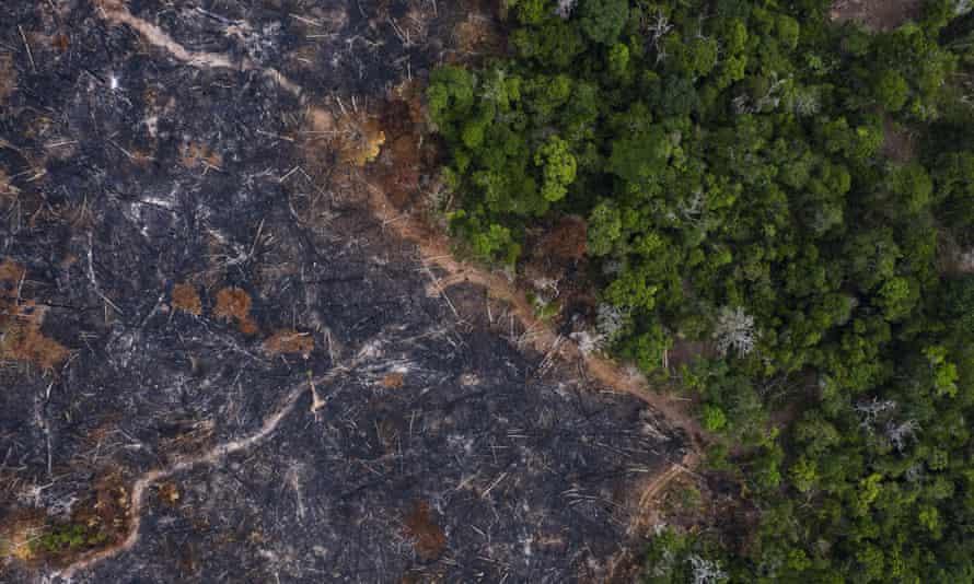 A burned area of the Amazon rainforest