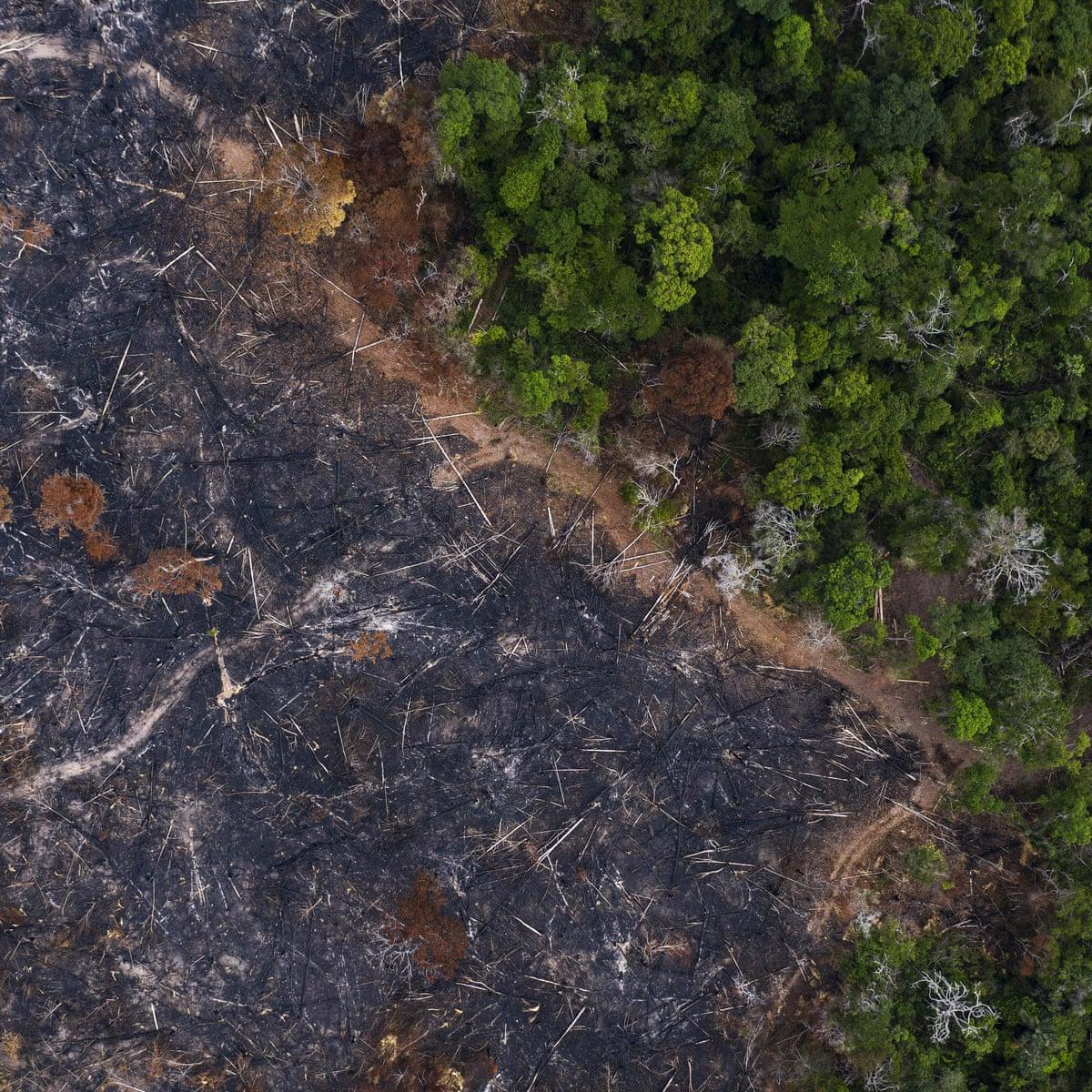 Brazil Using Coronavirus To Cover Up Assaults On Amazon Warn Activists World News The Guardian