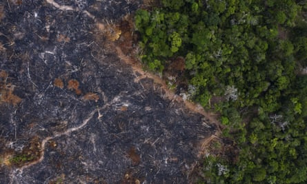A burned area of rainforest in Pará state. Grabbing land on federal reserves by deforesting it, burning the dead trees and putting cattle on it is common practice in the Amazon.