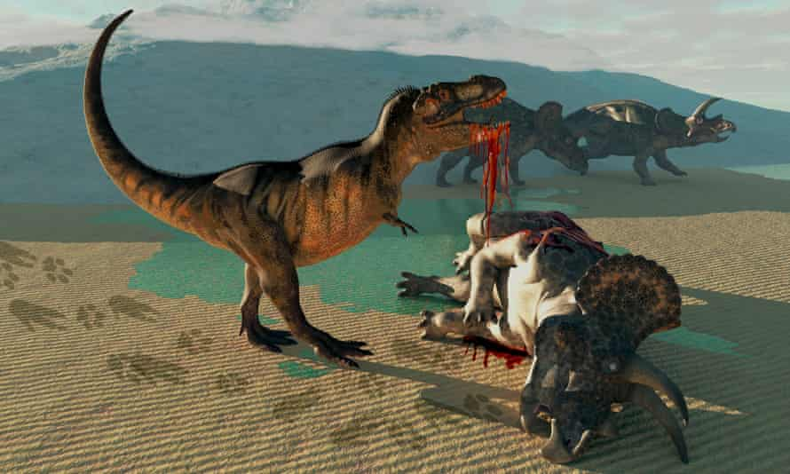A Tyrannosaurus Rex eats the flesh of a dead triceratops