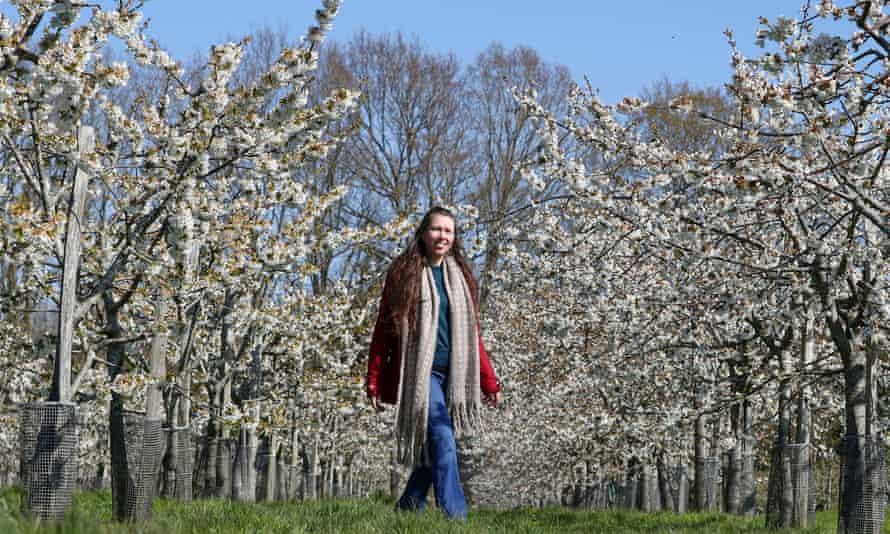 Blossom trees in the gardens of Sissinghurst Castle in Cranbrook, Kent.