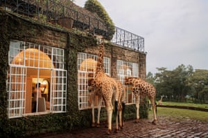 At Giraffe Manor, the animals can wander round as they please