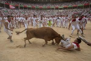 A heifer throws a man in the bullring