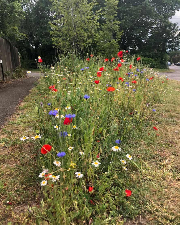 'Flack Wild Heath' – in Flackwell Heath, Bucks.
