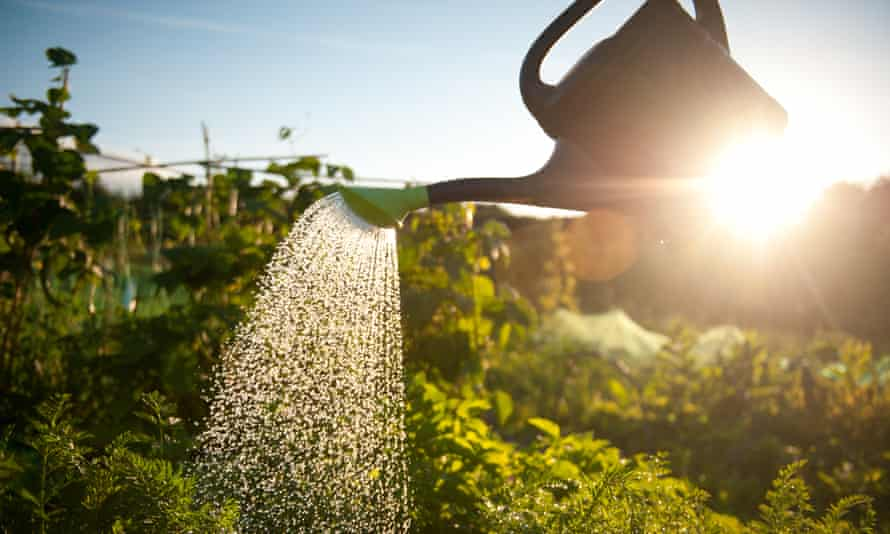 You can save water by using a watering can in the garden rather than using a hosepipe.