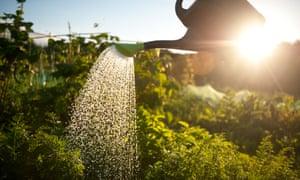 Поливать овощи лейкой