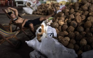 Manilla, Philippines: A cat perches on a sack of coconuts as a market porter takes a rest