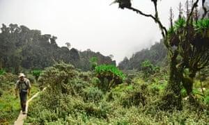 Uganda Rwenzori Heather Zone on Day Two