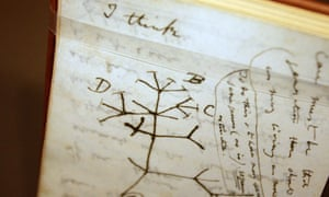 A 'tree of life' sketch in one of Darwin's many notebooks.