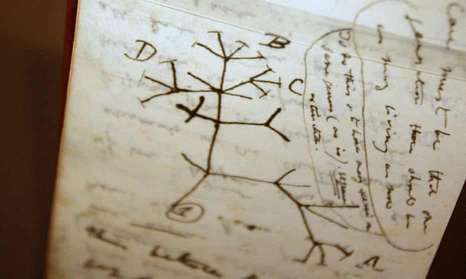 "A tree of life sketch in Darwin's ""B"" notebook."