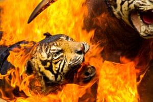 Tigers, ivory and other wildlife contraband that has been confiscated from poachers in Band Aceh, Sumatra, Indonesia