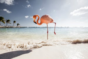 Renaissance Beach, Aruba, is a favourite among Instagrammers for its white sands and pink flamingos.