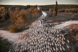Spain is the only country that maintains a network of historic paths that exceed 125,000 km. The origin of many of these pathways, some of them with more than 8,000 years of history, stems from the migrations that have historically been made nomadic shepherds. Today transhumance in Spain is threatened due to the scarcity of public aid.