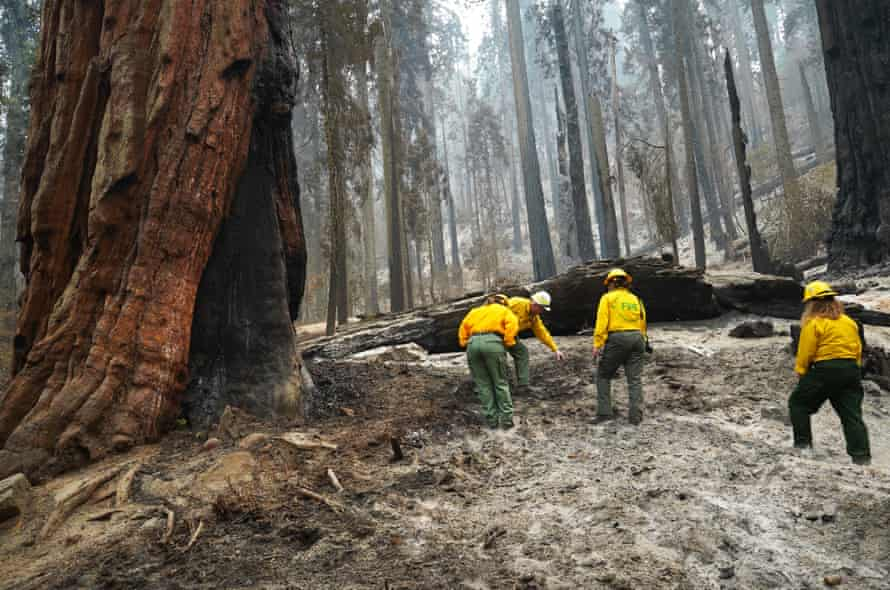 National Park Service officers inspect the charred ground in Giant forest in Sequoia national park on 30 September.