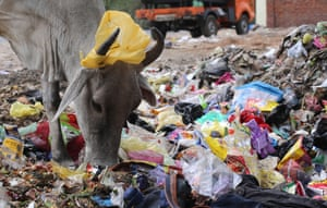 A cow models a plastic head decoration for cattle in New Delhi. India will eliminate all single-use plastic in the country by 2022, the prime minister, Narendra Modi, announced this week.