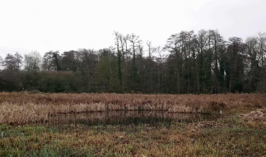 A small pond, fringed behind and to the sides with sedges and reeds.