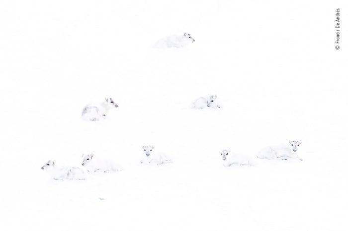 Амьтдын шилдэг таван гэрэл зураг