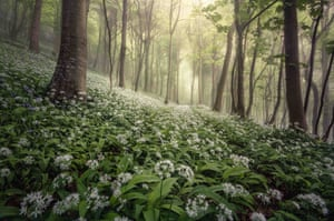 Woolland Woods, Dorset | Chris Frost | Landscape photographer of the year 2020