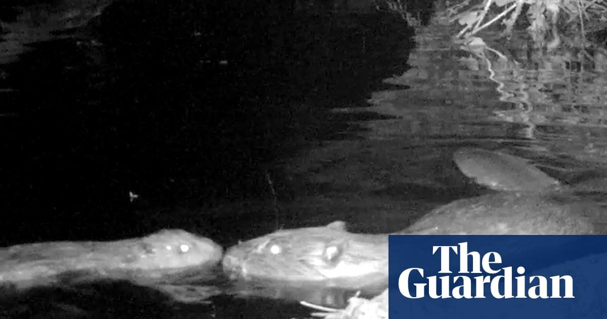Baby beaver named after footballer Marcus Rashford by popular vote