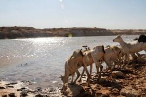 Animals drink from the Biyagadud dam