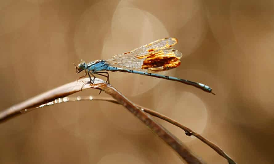 A damselfly covered in oil from the 2010 Deepwater Horizon oil spill in the Gulf of Mexico. Banks are being urged to stop financing fossil fuels and other sectors that contribute to biodiversity loss.
