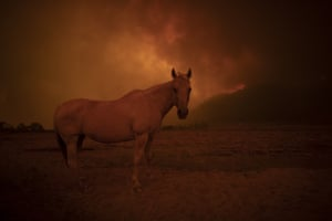 A horse is seen against smoked-filled skies in Canberra, Australia