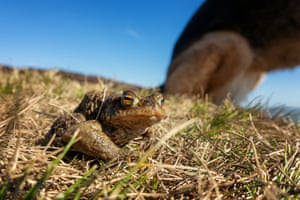 Crouching toad, hidden dog: 'During the coronavirus lockdown, connections with wildlife are proving to be my solace.'