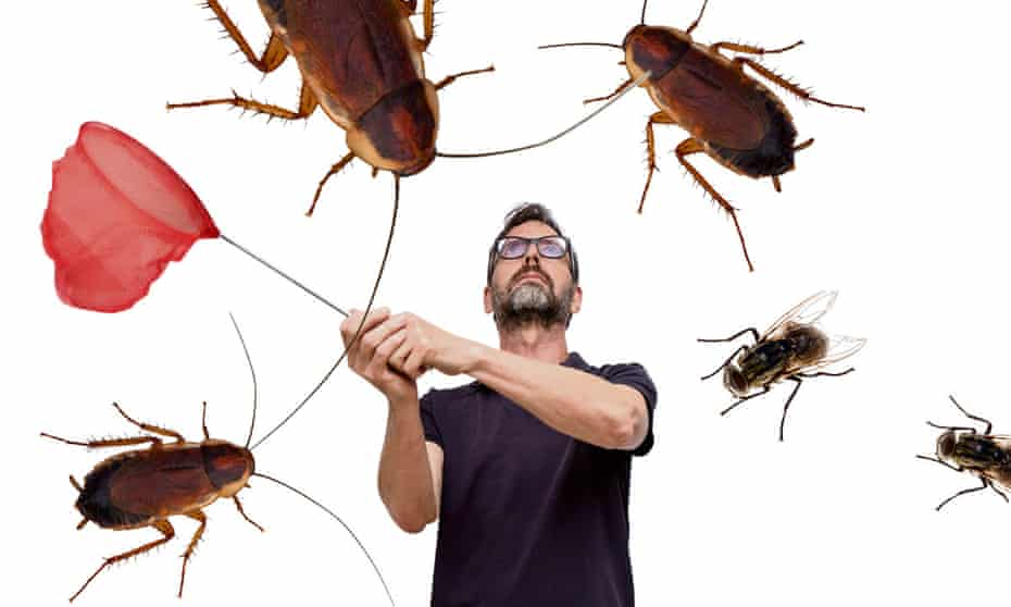 Tim Dowling … 'It's easy to get angry with household pests.'