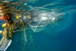 Baby humpback whale entangled in shark nets around the Gold Coast in Queensland, Australia