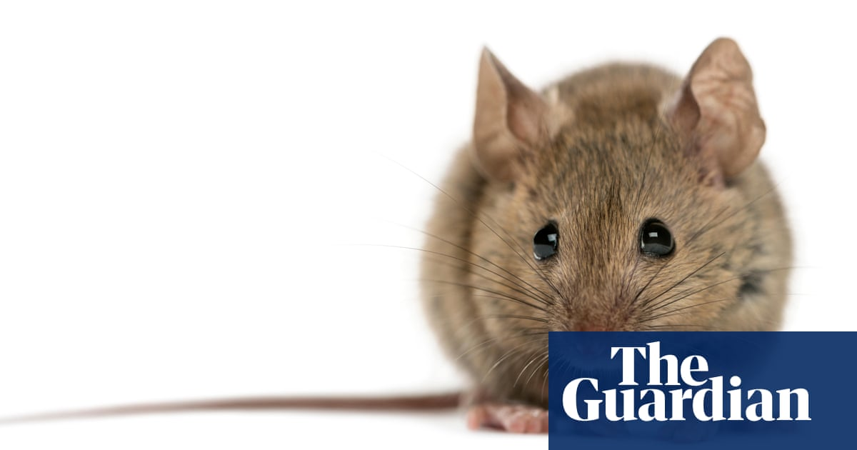 Alys Fowler How To Stop Mice Rats And Squirrels Eating Your