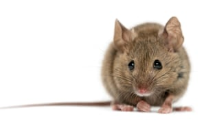 Alys Fowler: how to stop mice, rats and squirrels eating
