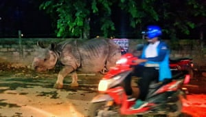 A one-horned rhino walks on the street of Sauraha, a tourism hub in southwest Nepal's Chitwan district