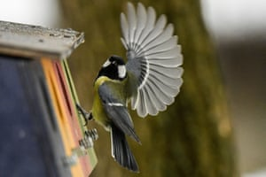 A tomtit feeds from a bird feeder at a park in Moscow